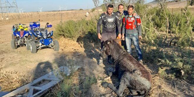 Cuatro Quadtreros salvan a un burro atrapado en un charco
