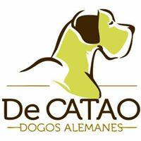 Foto del perfil de David De Catao Camacho
