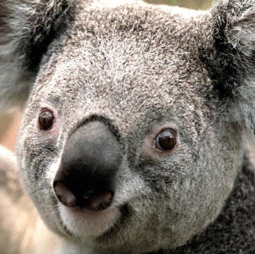 Foto del perfil de jose francisco varela santiago